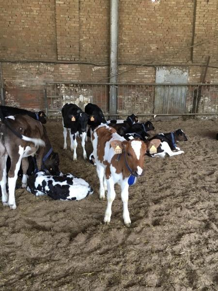 bovine latte (4)